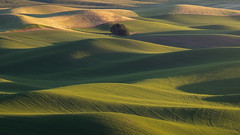 DSCF2156-Edit (Brian.Schick) Tags: palouse steptoe warm sunset rolling hills minimalism abstract
