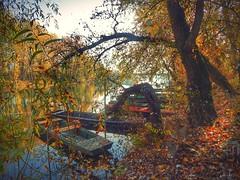 Tokaj (viktórianagynépetró1) Tags: autumncolors autumntime autumn trees