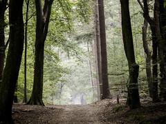 Back in wonderland. (Jenne Barneveld) Tags: mystical mythical forest fairyworld trees tree woods wonderland morning morningwalk enchanted enchanting beginning october autumn autumncolors netherlands