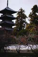 2018.11.18: bitchu kokubunji temple (Nazra Z.) Tags: autumn leaves raw vscofilm okayama japan 2018 nature historical site soja