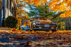 Fall and cars (m_hamad) Tags: fall fallcolors katiescarsandcoffee carsandcoffee 300zxturbo turbo 300zx nissan300zxturbo nissan datsun carphotography carporn cars carsofinstagram car instacar photography carswithoutlimits carlifestyle automotivephotography carspotting cargram supercar classiccars instacars classiccar jdm supercars carstagram ford vintagecar carshow automotive caroftheday bhfyp nature naturebeauty greatnature explore nationalgeographic dazzlingshot beauty canon 7dmkii dc blinkagain ultimateshot supershot