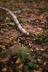 _DSC5829 (noemi_bt) Tags: primavera flores natureza colorido verde amarelo rosa detalhes salvador bahia brasil spring flowers nature colorful green yellow pink details brazil