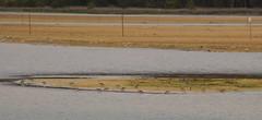 Lake Conjola (RossCunningham183) Tags: lakeconjola nsw australia birds