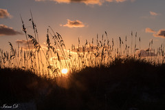 Good morning (Irina1010) Tags: sunrise reeds dunes sand beach ocean atlantic sun sky cloud light morning beautiful saintaugustine nature canon october 2018