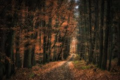 Light at the end of the... (Claudia G. Kukulka) Tags: forest wald trees bäume autumn fall herbst november leaves foliage laub blätter path weg road