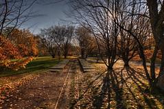12-Britzer Garten_181116_N- 07 (sigkan) Tags: deutschland berlin britzergarten hdr nikond700 nikon2485mmf284