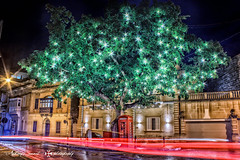 The lighted tree. (Tony Sammut) Tags: canoneos550d canon canoniani efs1855mmf3556isii finegold flickr flickrclickx longexposure lights lighttrails lightroom tripod thelook travelplanet beautifulcapture blinkagain bulbmode hdr malta tree