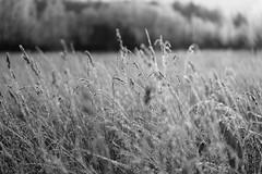 Cristal play (andrey.senov) Tags: russia kostroma winter frost field grass december россия кострома зима мороз поле трава иней province провинция fujifilm fuji xa1 fujifilmxa1 50faves