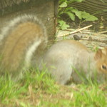 squirrel 12 3 18 thumbnail