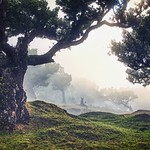 Fantastic Florestal thumbnail