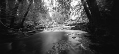 (facenorth) Tags: holga120wpc mediumformat pinhole ilfordhp5plus400 blackandwhite bw selfdeveloped negative kodakhc110 scan pinholephotography milf manilovefilm lomography longexposure opishing river toycamera