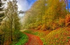 Autumn mist in the forests of Hocheck near Oberaudorf, Bavaria, Germany (UweBKK (α 77 on )) Tags: autumn mist fog forest path weg hike laub leaves trees tree fall colors colours hocheck oberaudorf bayern bavaria germany deutschland europe europa iphone platinumheartaward