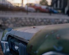 Car details (caliwinter) Tags: portra400 kodakportra400 kodak asahipentax6x7 losangeles la nela highlandpark canoscan canoscan9000f 9000f morning cars film mediumformat