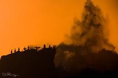 Living On The Edge Of The Storm (DanRansley) Tags: atlantic britain cornwall danransley danransleynet england gb greatbritain kernow phalacrocoraxcarbo photography uk unitedkingdom bird birding coast conservation dusk evening feather nature ocean ornithology sea seabird sky spray storm sunset water waves wings