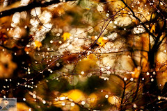 VW_DSC9641 (Nick Woods Photography) Tags: autumn autumncolours autumnleaves abstract abstractpicture abstractphoto abstractart abstractcreation raindrops lights lightshow nature natureslights naturescolours digitalart digitalabstract