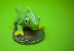 Green - [MacroMondays_20181112] (Arranion) Tags: macromondays green hmm macro closeup chameleon close small money