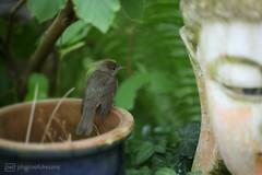 little bird in my secret garden (photos4dreams) Tags: bird vogel mysecretgarden photos4dreams photos4dreamz p4d