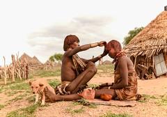 Hamar Tribe (Rod Waddington) Tags: africa african afrique afrika äthiopien ethiopia ethiopian ethnic etiopia ethnicity ethiopie etiopian hamer hamar tribe traditional tribal culture cultural village omovalley outdoor omo omoriver huts dog