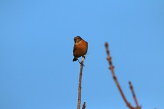 IMG_4880 (monika.carrie) Tags: monikacarrie wildlife scotland
