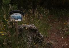 Cog Wild: Tyres as functional decor (AMSH 93 scavenger15 Upcycling) (jpp22) Tags: scavenger15 cogwild uenukupines ruapehu waikuneforest newzealand upcycling