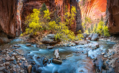 Multishot Panorama! Zion Canyon Peak Fall Colors Cottonwoods Zion Narrows Hike Pano! Zion National Park Fall Foliage Utah Autumn Colors Fine Art Landscape & Nature Photography! Sony A7R III & Sony FE 16-35mm f/2.8 GM G Master Lens! Sharp High Res Photos! (45SURF Hero's Odyssey Mythology Landscapes & Godde) Tags: zion canyon peak fall colors cottonwoods narrows hike national park foliage utah autumn fine art landscape nature photography sony a7r iii fe 1635mm f28 gm g master lens sharp high res a7r3 gmaster