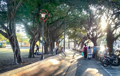 跨越障礙 Crossing obstacles (葉 正道 Ben(busy)) Tags: taiwan taichung park girl landscape tree people 台灣 台中 公園 女孩 風景 樹 人 streetscape street