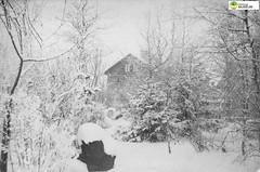 tm_11034 - Fam Lidwalls (Tidaholms Museum) Tags: svartvit positiv byggnad building exteriör exterior winter snow vinter snö bostadshus trädgård garden familj family 1880talet 1890talet