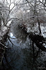 Branches, neige et reflets (DOMVILL) Tags: branches domvill eau france lamarque neige nord reflets rivière wwwflickrcompeoplevildom