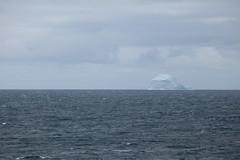 IMG_0208 (y.awanohara) Tags: humpbacks humpbackwhales whales whale southgeorgia scotiasea january2019 wildlife cetacean