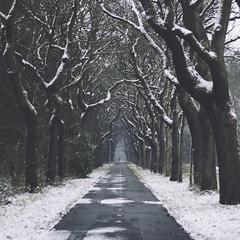 winter (Jos Mecklenfeld) Tags: agfavista800 nulweg snow schnee sneeuw trees bomen baumen winter sonya6000 sonyilce6000 minolta minoltamd50mmf20 westerwolde niederlande nederland terapel groningen netherlands nl
