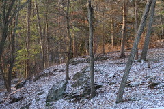 Trace of snow (Vox Sciurorum) Tags: snow sunlight woods g7xii