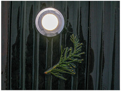 Let a Little Light In (prima seadiva) Tags: conifer leaf light market pikeplace rainy deck rubber wet shadow