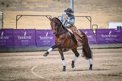 GY8A8739.jpg (Brad Prudhon) Tags: 2018 animals dancing drafthorseshow dressage essentialoilsfarm horse mona september utah youngliving dance