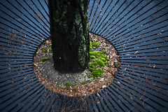Winter Moss and Tree (Sean Anderson Media) Tags: moss grate shallowdof shallowdepthoffield sonya7sii canon50mmf18 winter tree detail pattern design fotodiox fotodioxpro canontosony lensadapter canon50mmf18stm