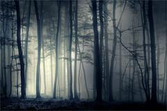Mysterious woodland (Eva Haertel) Tags: eva haertel landscape landschaft wald forest woodland trees nebel fog mist dunkelheit darkness obscurity stimmung mood geheimnisvoll monochrom mysterious germany