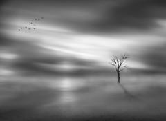 stand alone RS (P.E.T. shots) Tags: longexposure monochrome blackandwhite minimalism sky tree water absoluteblackandwhite