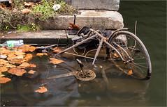 Fahrzeughalter gesucht / Vehicle owner wanted (ludwigrudolf232) Tags: wasser treppen fahrrad laub