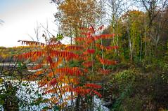 Sterling Forest_6740 (smack53) Tags: smack53 sterlingforestpark rocklandcounty autumn autumnseason fall fallseason fallcolors trees foliage nikon d300 nikond300 newyork
