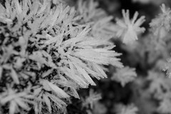 Ice Spikes (steve_whitmarsh) Tags: aberdeenshire scotland scottishhighlands highlands macro closeup ice frost crystal blackandwhite bw monochrome frozen topic