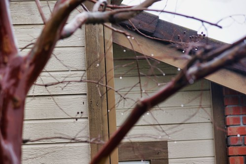 2019-01-15 - Nature Photography, Signs of Rain