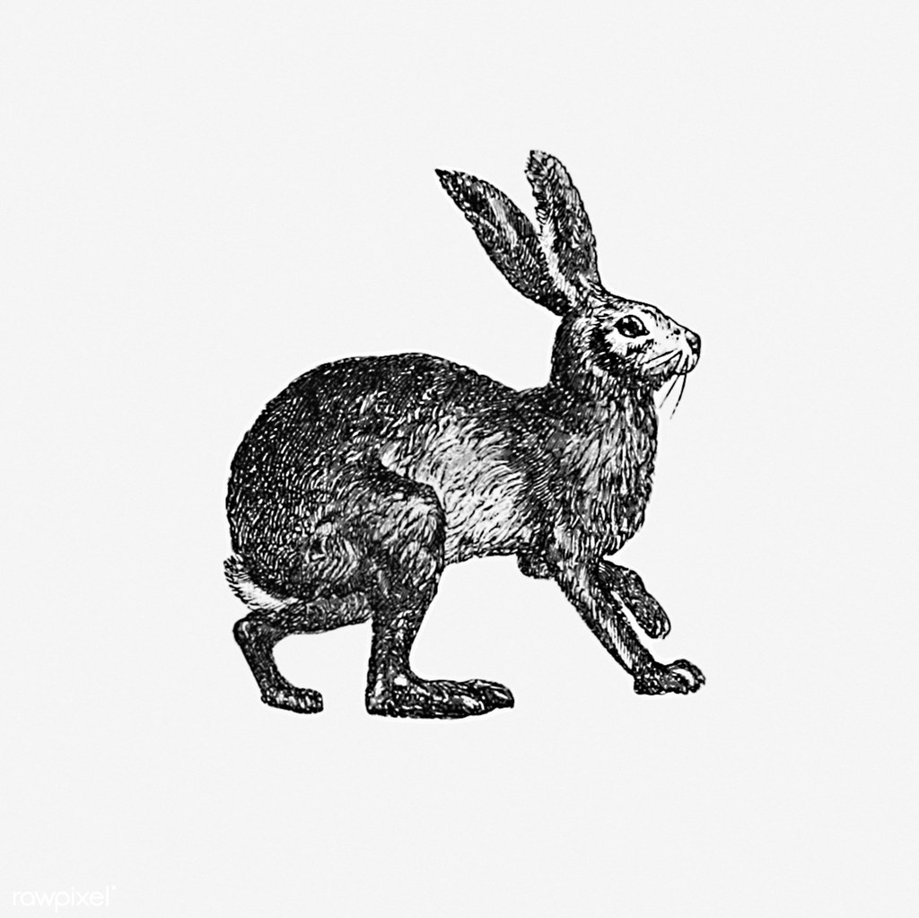 the world s best photos of bunny and drawing flickr hive mind Minecraft Hive Server IP Pe vintage hare illustration free public domain illustrations by rawpixel tags animal antique art