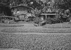 House In The Country, Ngapali, Myanmar (Eric Lafforgue) Tags: agriculture architecture asia asian badcondition balcony blackandwhite boat buildingexterior builtstructure burma day farm grainy horizontal horticulture house land myanmar nature nopeople nobody oldfashioned outdoors photography plant plantation rough rural traditionallymyanmarian travel traveldestinations trix leicaburma313 ngapali rakhinestate