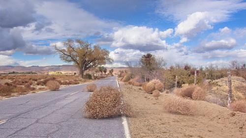 Tumbleweeds Desert Road 497 B