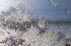Fleurs de gel et de givre. (nicoleforget) Tags: vitre givre motifs dessins lumière