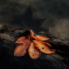 Image from a warmer day (David DeCamp) Tags: autumn leaves water