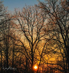 Ice Trees at Sunrise (Catch the Moment Photography) Tags: landscapephotography landscapes winter ice wadehooperphotography trees sunrise limbs warmglow winterscene branches sky scenic sunlight tennessee snow