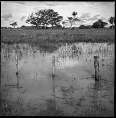 inundación - Corrientes, Argentina. (lamachineaveugle) Tags: campo argentina corrientes santa ana ruta camino hasselblad bw postes