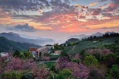 Sunset at tea field 頂石棹櫻花季 (Vincent_Ting) Tags: 頂石棹 石棹 番路鄉 竹崎鄉 阿里山 嘉義 雲海 夕陽 夕照 茶園 琉璃光 台灣 taiwan jiayi alisan formosa clouds sunset sky teafield seaofclouds 雲瀑 雲霧 阿里山國家公園 crepuscularrays vincentting 櫻花 cherryblossom