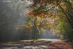 Ireland - Co.Roscommon - Lough Key Forest Park - Autumn rays (Hugh Rooney 34) Tags: autumn autumnmists boyle colours countyroscommon deciduous forest forestpark ireland landscapes leaves leisure loughkey nature outdoors parks rays republicofireland trees walking red patterns