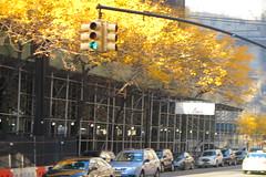 IMG_5416 (Mud Boy) Tags: nyc newyork brooklyn